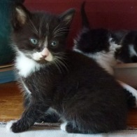FIVE NEW KITTENS ARE BORN AT THE HOUSE JUST SHORTLY BEFORE