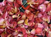 rose petals © Gail Harker