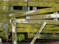 mossy lines and structures © Gail Harker