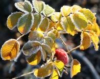 hoar frost ©Gail Harker