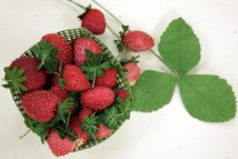 here are the stitched berries and handmade basket © Isabel Parker