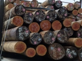 Design Inspirations - messages on logs©Gail Harker