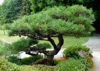 Japanese Tea Garden, Arboretum, Seattle, WA © penny Peters
