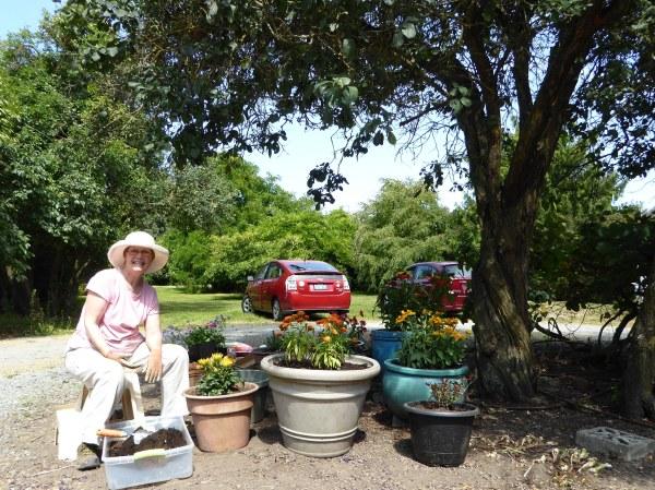 Jane Clark potting flowers around plum tree