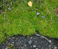 Moss on pavement ©Gail Harker
